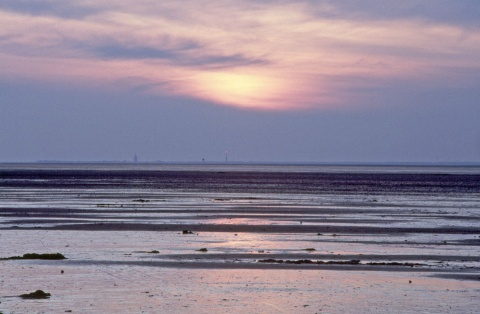 The Wadden Sea - Picture:©Wangerland Touristik